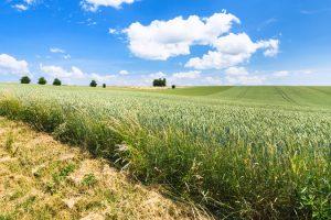blau, fahrt, reisen, agrar, landwirtschaftlich